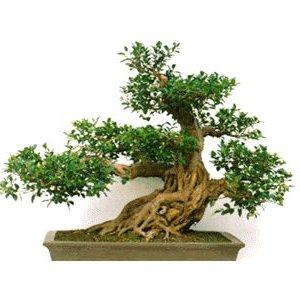 Nadawanie drzewku kształtu
