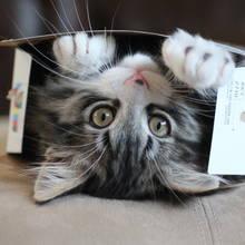 Jak zrobić kotu pudełko do zabawy?