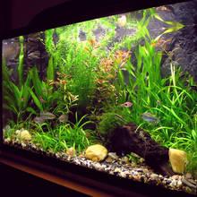 O czym należy pamiętać, urządzając akwarium dla rybek?