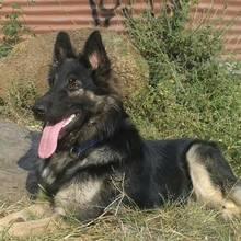 Opieka nad psem podwórkowym – podstawowe zasady