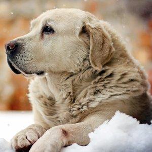 Jak dobrze chronić skórę psa zimą?