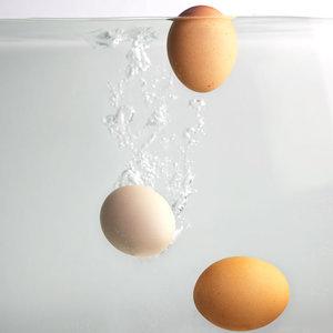 Białko z jajka