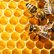 Skuteczny domowy krem z woskiem pszczelim
