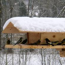 Jak zrobić drewniany karmnik dla ptaków?