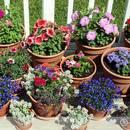 Podstawowe zasady pielęgnacji roślin doniczkowych