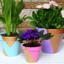 Co należy wiedzieć o przesadzaniu roślin?