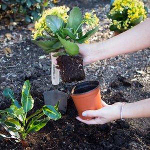 Jak wyjąć roślinę ze starej doniczki?