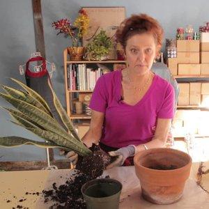 Jak posadzić roślinę?