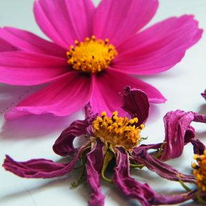 Jak utrwalić bukiet kwiatów za pomocą wosku?