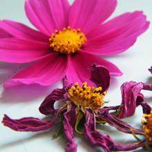 Jak zrobić ładne kwiaty w wosku?