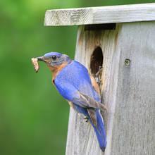 Jak umieścić kamerę w budce dla ptaków?