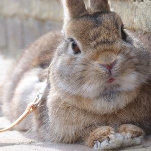 Co powinna zawierać klatka dla królika?