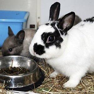 Kuweta dla królika