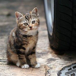 Dlaczego należy wyprowadzać kota na smyczy?