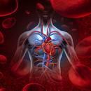 Jak zapobiegać chorobom układu krążenia?