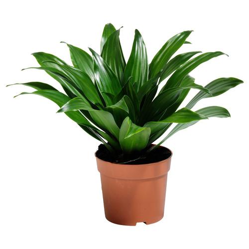 Zasady pielęgnacji roślin doniczkowych