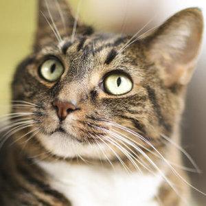 Jaki kot jest odpowiedni dla ciebie?