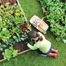 Sadzenie warzyw w ogródku – podstawowe zasady