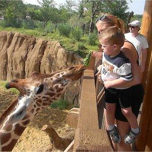 Odwiedziny zoo