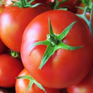 Ziarna pomidora