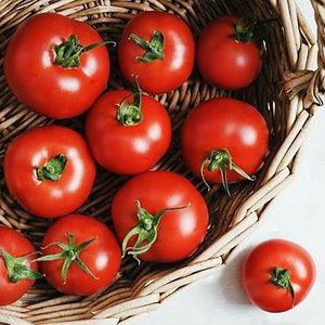 Pomidory w ogródku