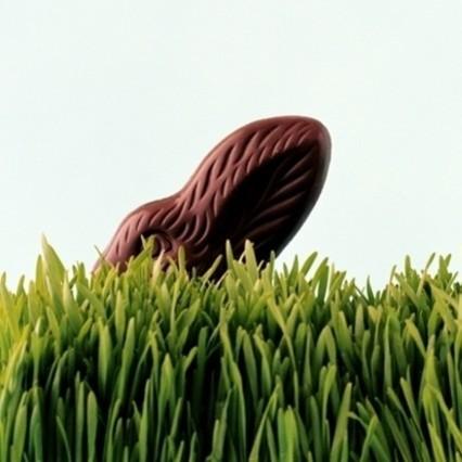 Jak uprawiać trawkę wielkanocną?