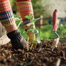 Sposób na poprawę gleby na wiosnę