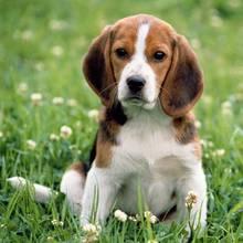 Zasady wyrabiania paszportu dla psa