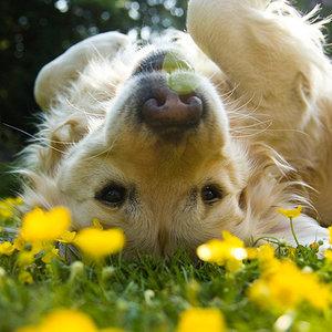 Oglądanie psa