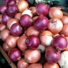 Jak uprawiać cebulę?