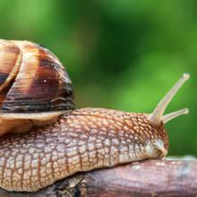 Jak pozbyć się ślimaków z ogrodu?