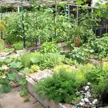 Które zioła odstraszają szkodniki?