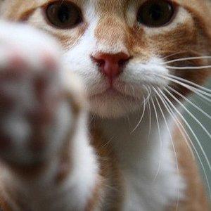 Jakich kotów nie szczepić?