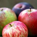 Łapanie jabłek – zabawa dla dzieci