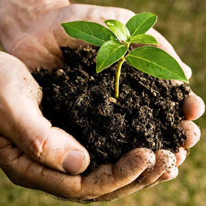 Jak przygotować dobry kompost?