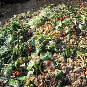 Czego nie wrzucać do kompostu?