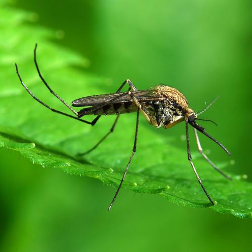 Jak poradzić sobie z komarami?