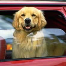 Podróż samochodem z psem – podstawowe zasady