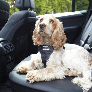 Bezpieczeństwo psa