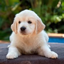Jak nauczyć psa załatwiania się poza mieszkaniem?