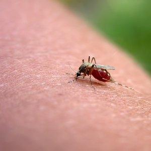 Jak postępować w razie ukąszenia przez owada?
