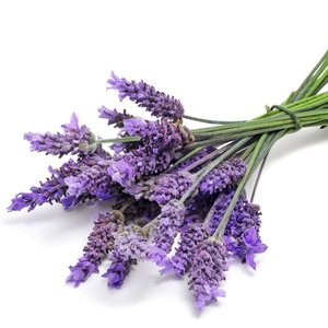 Piękny zapach kontra mole