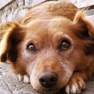 Kontrola zdrowia psa – jak to robić?