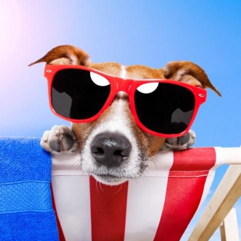 Jak nie dopuścić do udaru cieplnego u psa?