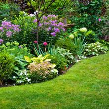 Czym się kierować, wybierając rośliny do swojego ogrodu?