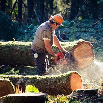 W jaki sposób należy ścinać drzewa?
