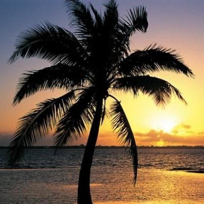 Jak pielęgnować palmy w domu?