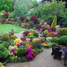 Jak dobierać barwy kwiatów w ogrodzie?