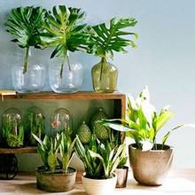 Jak pielęgnować liście roślin doniczkowych?