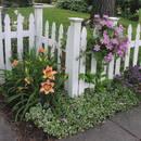 Czym się kierować, kupując powojniki do ogrodu?